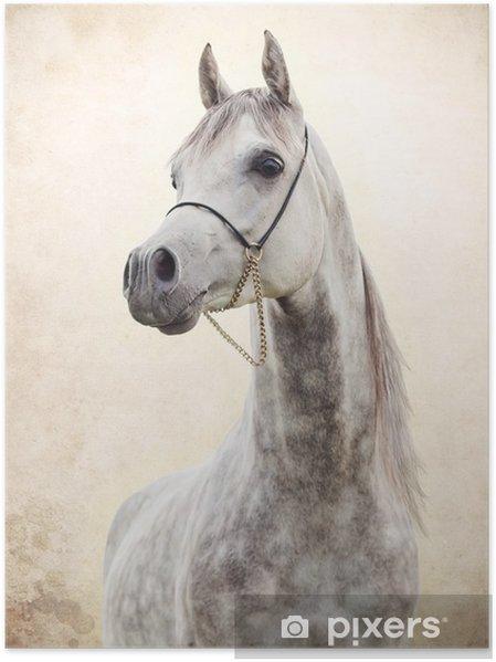 Plakat Portrett av grå vakker arabisk hingst på kunstbakgrunn -