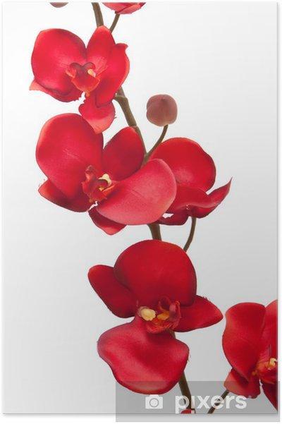 rød orkide