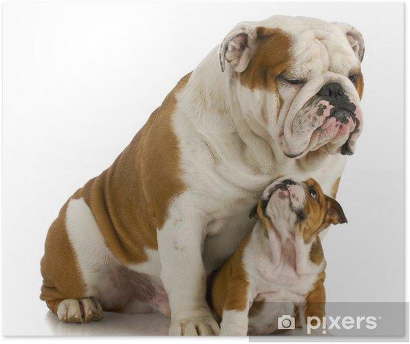 f0b96065 Plakat Stor og liten hund • Pixers® - Vi lever for forandring