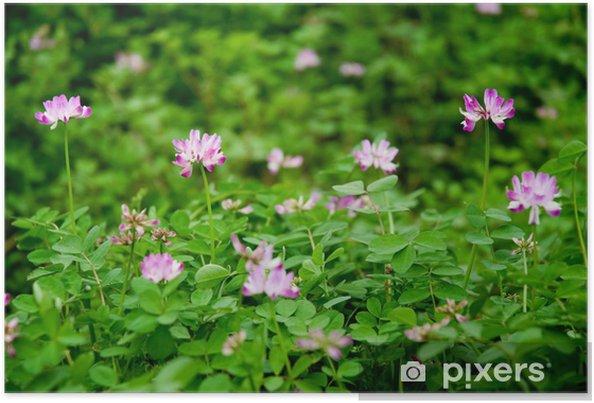 Plakát 紫云英 - Květiny