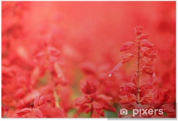Plakát 赤 い サ ル ビ ア の 花 - Roční období