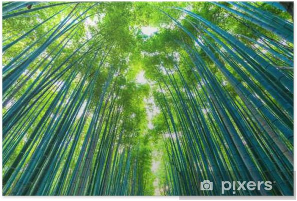 Plakat 京都 嵐山 早朝 の 竹林 - Pejzaż