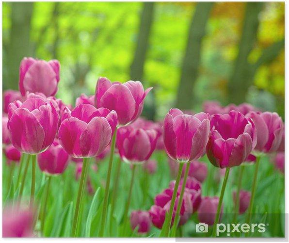 Plakát ピ ン ク の チ ュ ー リ ッ プ - Květiny