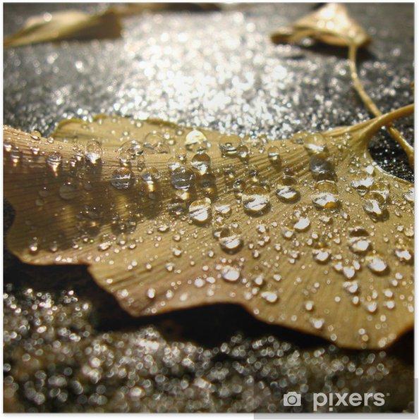 Plakát 水 玉 光 る 落 ち 葉 - Rostliny