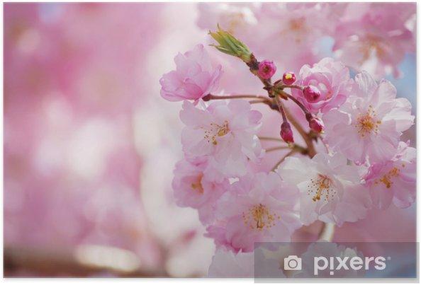 Plakát シ ダ レ ザ ク ラ - Květiny