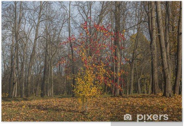 Plakát Одиноко дерево - Lesy