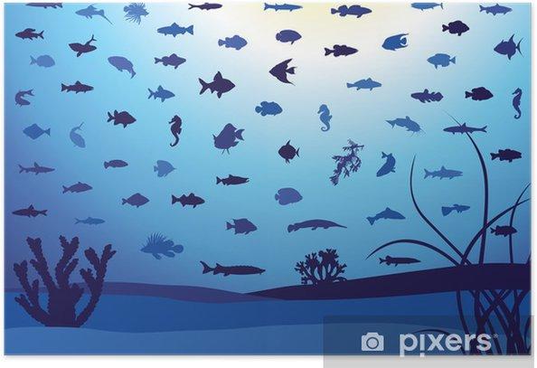 Plakat 62 Ryby sylwetki pod wodą. - Zwierzęta żyjące pod wodą