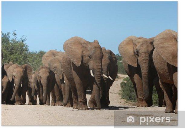 Plakat African stado słoni, - Tematy