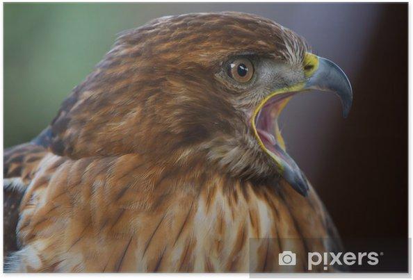 Plakát Aigle císařský - Ptáci