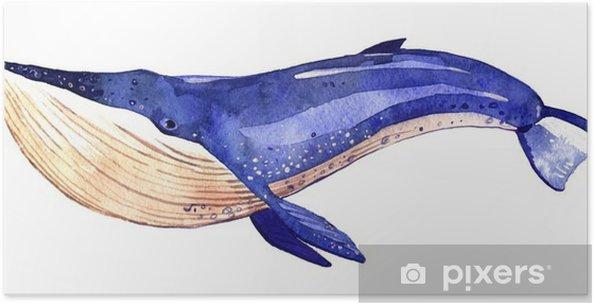 Plakat Akwarela wieloryba, ręcznie malowane ilustracji na białym tle - Zwierzęta