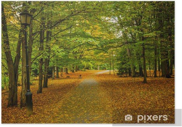 Plakat Aleja jesienią - Sporty na świeżym powietrzu