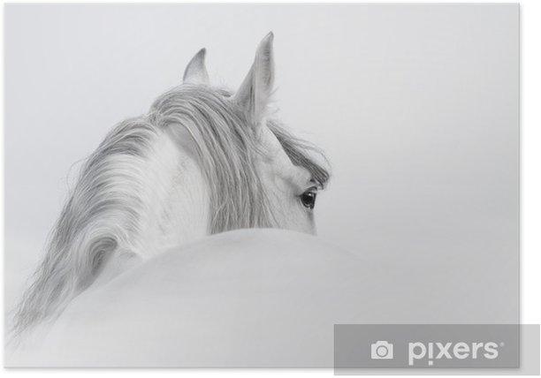 Plakat Andaluzyjski Koń w mgle - iStaging