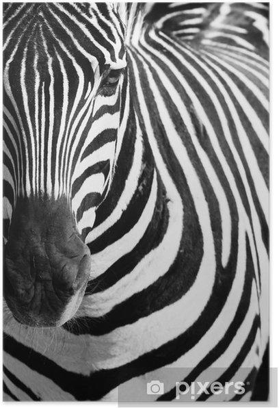 Plakát Animal zebry portrét - Témata