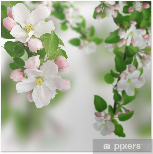 Plakat Apfelblüte - Jabłonie