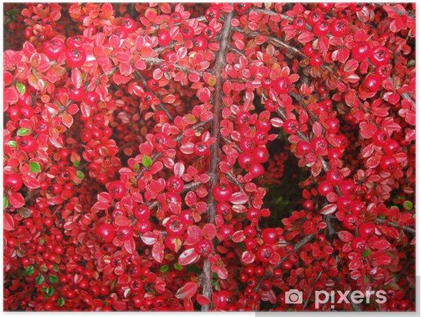 Plakát Arbuste si boule rouge - Stromy