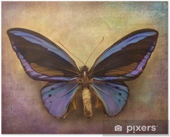 Plakat Archiwalne tła z Motyl - Tematy
