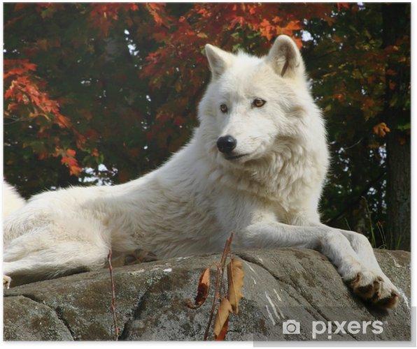 Plakát Arktický vlk, kterým se na skále - Témata