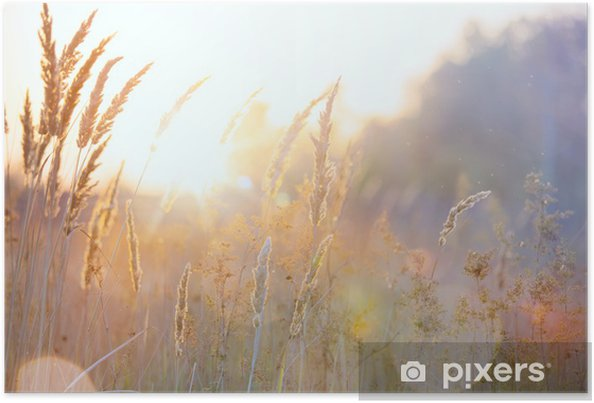 Plakat Art jesieni słoneczny charakter tle - Pory roku