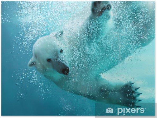 Plakat Atak niedźwiedzia polarnego pod wodą - Tematy