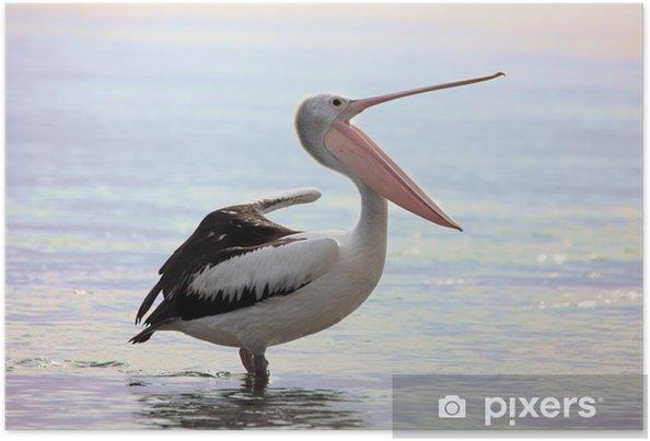 Plakát Australský pelikán Pelecanus conspicillatus zívá táhne - Ptáci