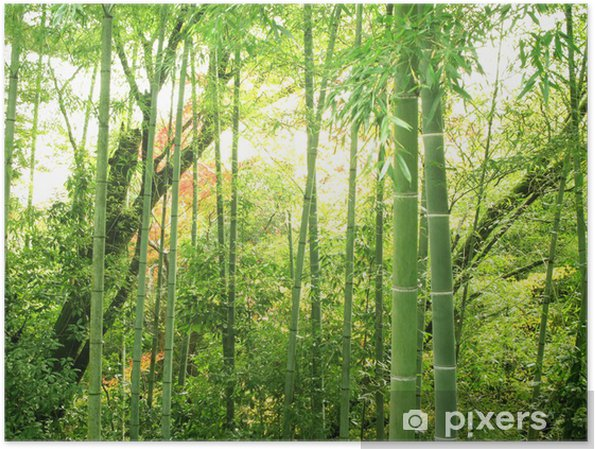 Plakat Bambus lesie - Tematy