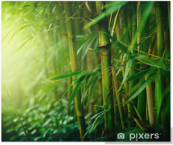 Plakat Bambus - Style