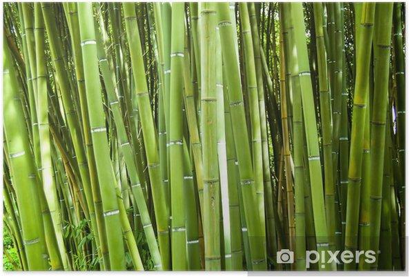 Plakat Bambus - Tematy