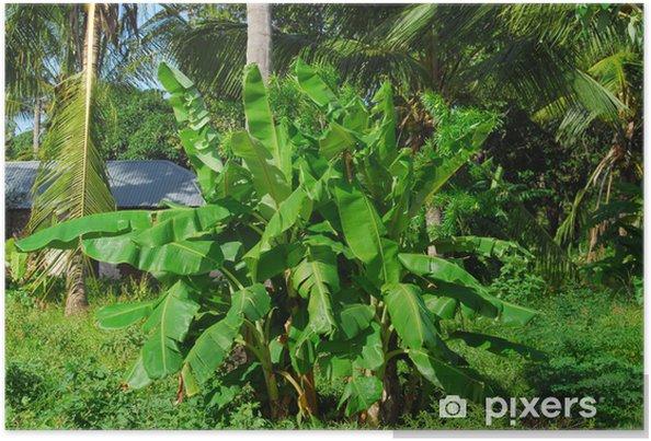Plakat Banan drzewo - Dom i ogród