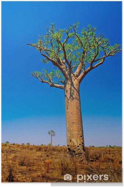 Plakat Baobab - Tematy