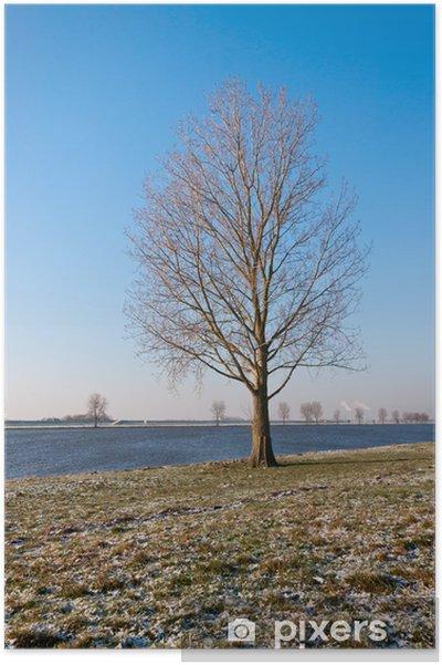 Plakat Bare samotne drzewo na brzegu rzeki w Holandii - Smutek