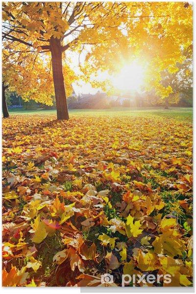 Plakát Barevné sunlighted podzim parku - Roční období
