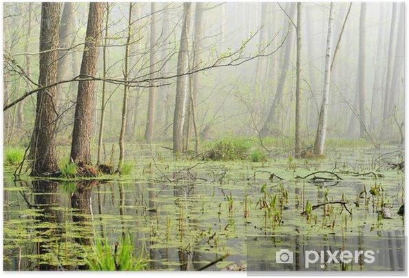 Plakát Bažiny v mlze na východ slunce - Příroda a divočina