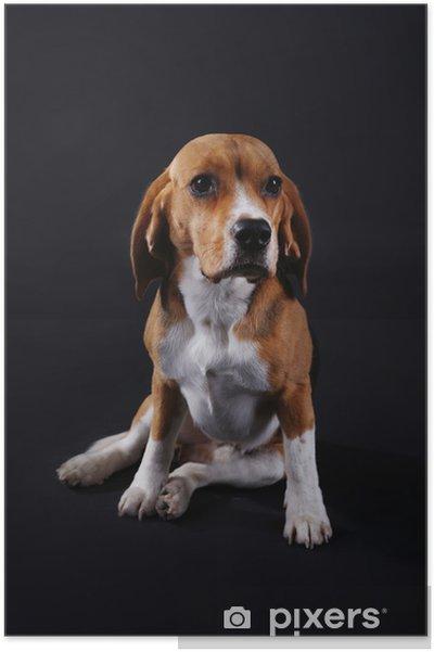 5e912f4265a Plakát Beagle pes na tmavém pozadí • Pixers® • Žijeme pro změnu