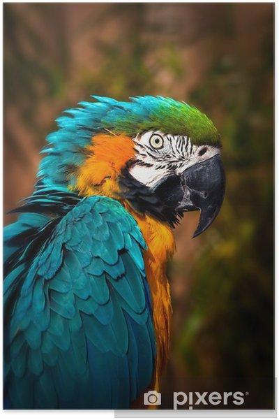 Plakat Beautiful Blue i ara Złoto - Portret Parrot - Tematy