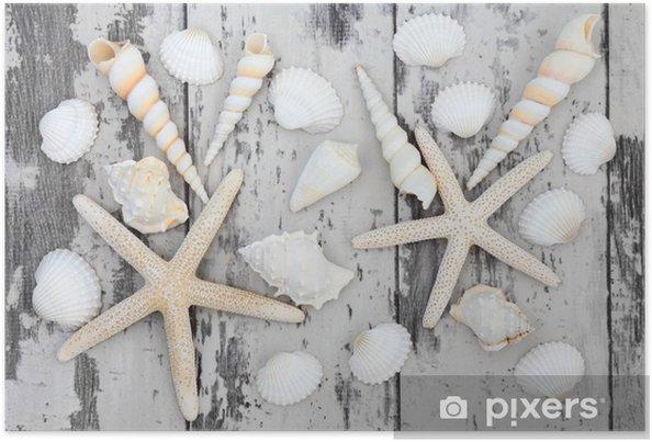 Plakat Beauty Seashell - Zwierzęta żyjące pod wodą