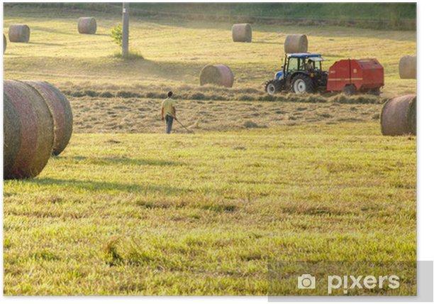 Plakat Beli słomy i Kombajn w polu kukurydzy - Rolnictwo