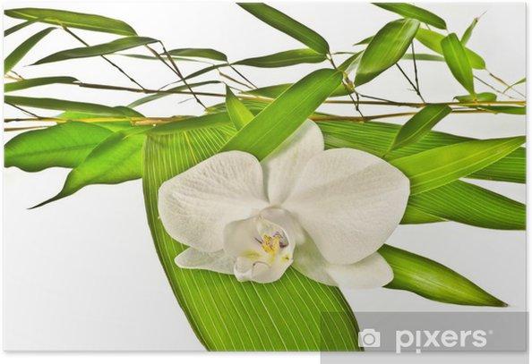 Plakat Biała orchidea i bambusa - Kwiaty