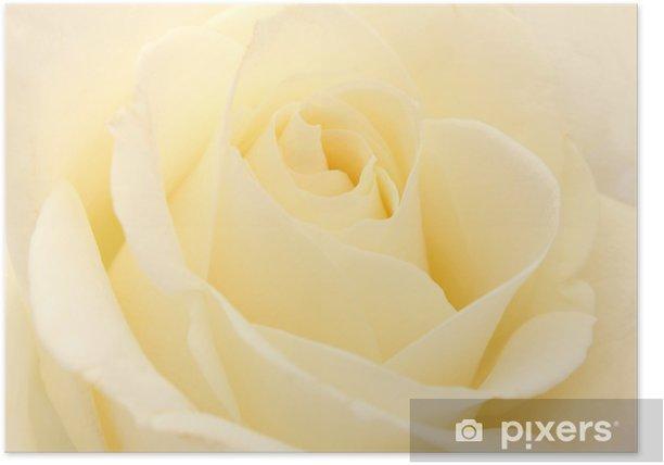 Plakat Biała róża - Tekstury