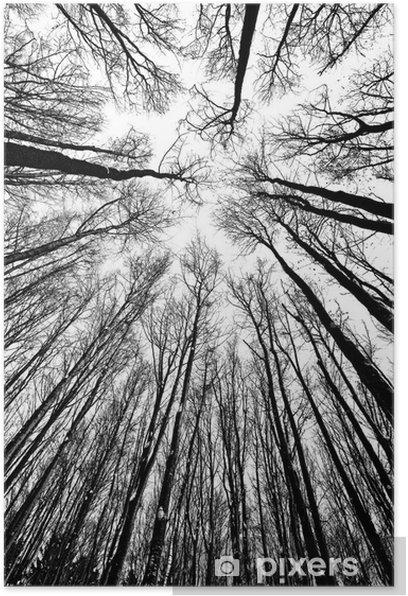 Plakat Białe i czarne sylwetki drzew - Style