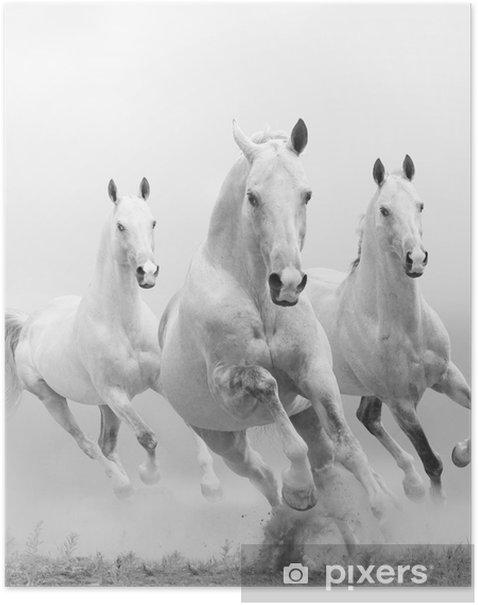 Plakat Białe konie w kurzu -