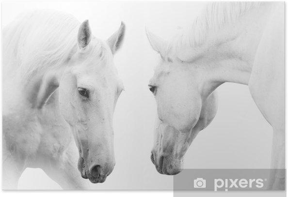 Plakat Białe konie - Tematy