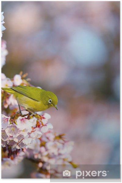 Plakat Białe oko i wiśni - Pory roku