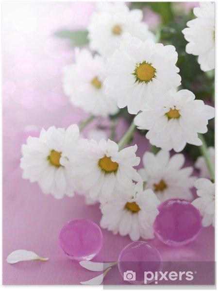 Plakat Białe stokrotki kwiaty - Uroda i pielęgnacja ciała
