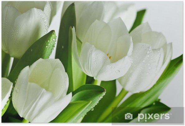 Plakat Białe tulipany - Tematy