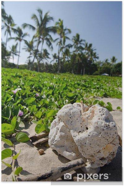 Plakat Biały kamień przed łąk pohuehue w Kaunaoa plaży - Ameryka