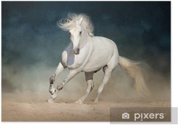 Plakat Biały koń biegnie do przodu w kurzu na ciemnym tle - Zwierzęta