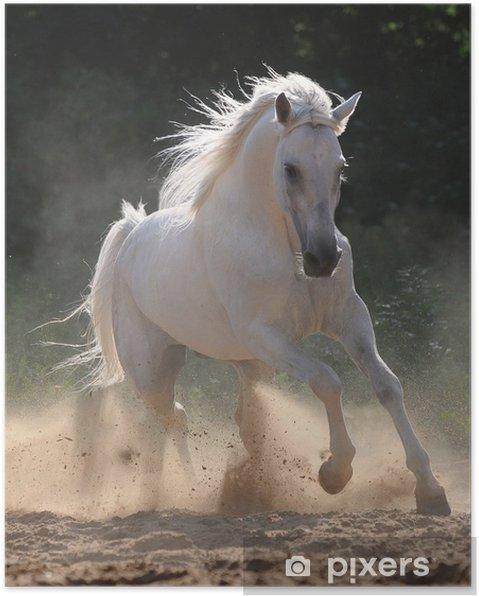 Plakat Biały koń biegnie galopem w pył - Tematy