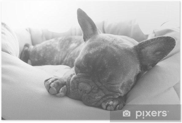 Plakat Big Sleep - Buldogi francuskie