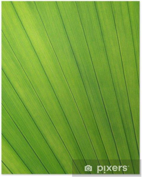 Plakat Blattstruktur - Rośliny