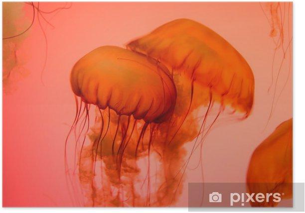 Plakat Bliska strzał z meduzy - Zwierzęta żyjące pod wodą